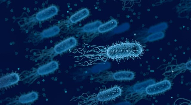 differences between Bacteria and Virus