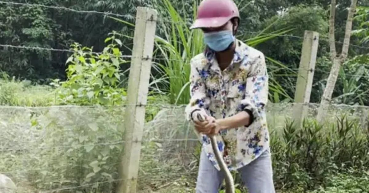 snake catching woman